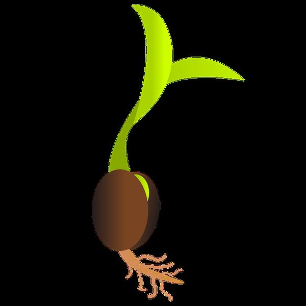 nasiona marihuany tanio