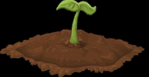 growbox sklep